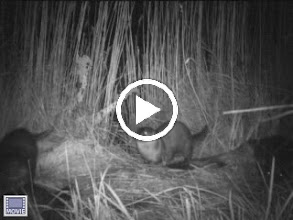Video: Otter party at one of Liz Baldwin's camera sites