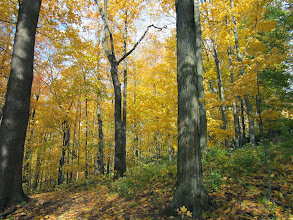 Photo: Autumn path through a yellow forest at Hills and Dales Metropark in Dayton, Ohio.