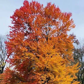 One Fall Tree by Lori Fix - Nature Up Close Trees & Bushes