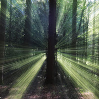 Lights in the wood di