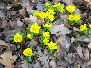 Photo: Erste Frühlingsboten im Park Juliusruh