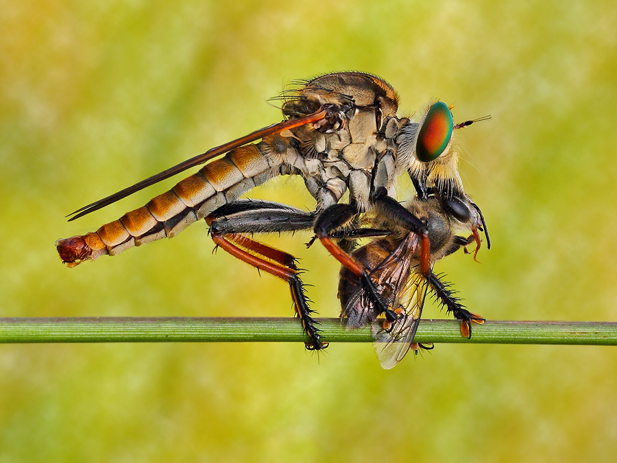Powerless by Syuwandi Sien - Animals Insects & Spiders