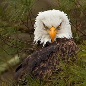 by Herb Houghton - Animals Birds (  )
