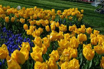 Photo: tulip gardens at Topkappi Palace