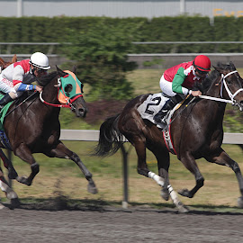 Racing for the Finish by Darlene Neisess - Sports & Fitness Other Sports ( equine, horses, horse, action, sports, horse racing, excitment, emerald downs, running,  )