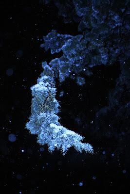 Inverno blu di stellab