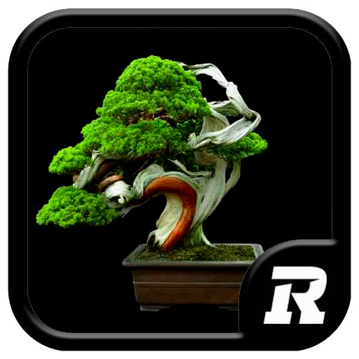 Design Bonsai Ideas 遊戲 App LOGO-APP開箱王