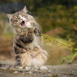 Rock Star Wannabe by Jane Bjerkli - Animals - Cats Portraits (  )