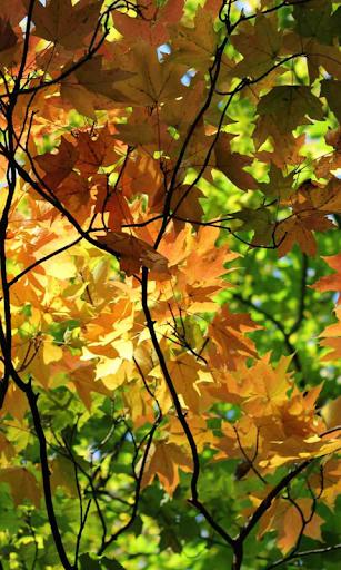 Autumn Wallpaper hack tool
