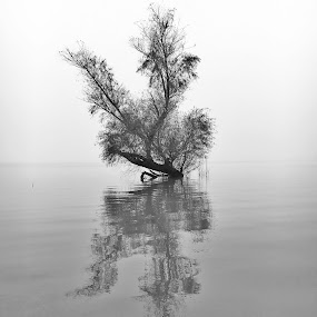 Foggy Tree Reflection by Stephanie Ostrander Bishop - Instagram & Mobile iPhone ( water, reflection, nature, tree, fog, black & white )