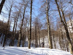 Photo: Nel bosco tra luce e ombra