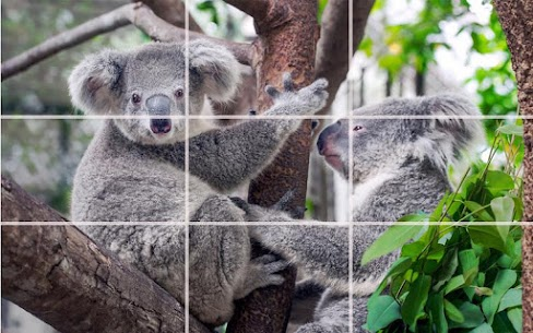 Puzzle – Bears and penguins 2