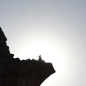 A bird in the Light by Shuvrangshu Kar - Buildings & Architecture Public & Historical ( bird, silhouette, qutub minar )