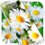 Daisies HQ Live Wallpaper file APK for Gaming PC/PS3/PS4 Smart TV