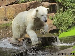 Photo: Knuts naechster Ausflug ins Wasser ;-)
