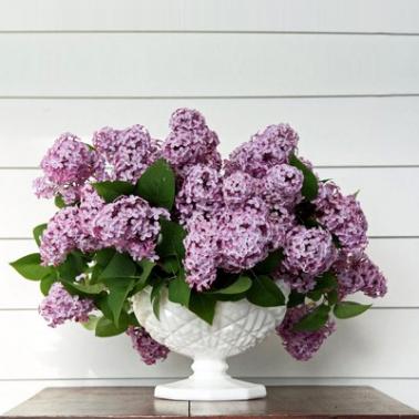 Cvećara Beograd online - 10 najpopularnijih vrsta cveća=s445