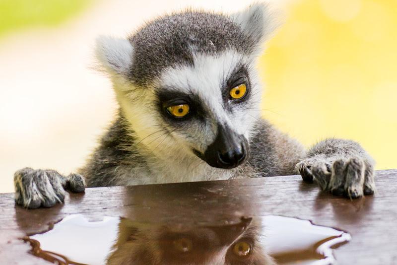 Lemure di Danyskar