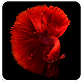 Aquarium Hobby - Learn about Aquarium Fish