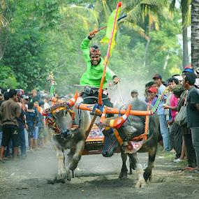 Mekepung by Purnawan  Hadi - News & Events Sports ( bali, indonesia, traditional, bull, culture, mekepung )