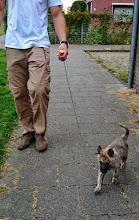 Photo: Pup groen (Meike - Mara) op pad aan een lijntje