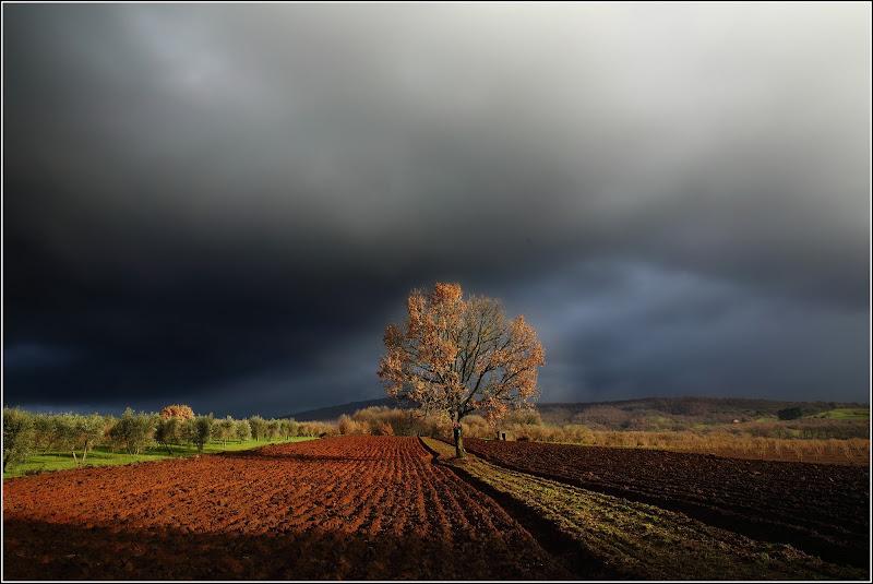 Contrasti d'autunno di Montanaro