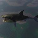 Pet Shark icon