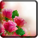 Roses Wallpapers for Chat Icon