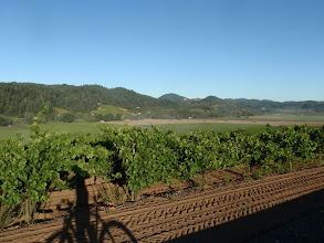 Photo: View back over the vinyards of Dry Creek Rd