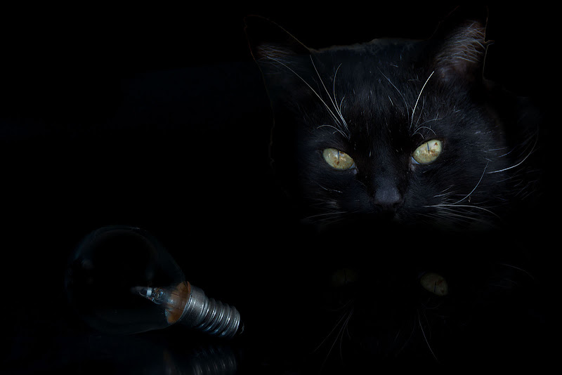 cat in the dark di dady2