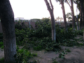 Photo: branches of trees outside of QRRS stadium trimmed for boasting its growth of height.