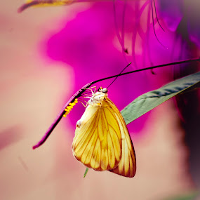 Life goes on  by Gabriel Cabrera - Animals Insects & Spiders ( butterfly, bugs, nature,  )