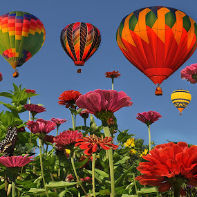 Carnival of Color by Corinne Noon - Digital Art Places ( photoshop art, zinnias, blue sky, colors, balloons,  )