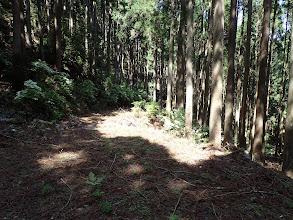 下で再度林道と合流