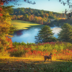 Fall colors by Mike Svach - Landscapes Sunsets & Sunrises ( fog, autumn, colors, fall, trees, leaves, dog )