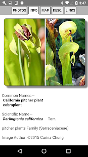 North California Wildflowers- screenshot thumbnail