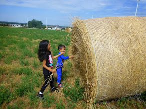 Photo: Now we could see them up close. Very close, as in the field behind Grandma's house.