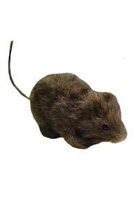 Råtta med päls