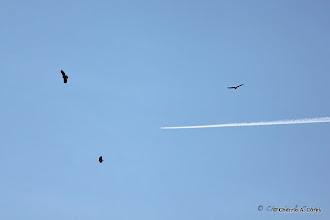 Photo: Three bald eagles