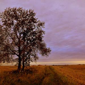 lone tree1.jpg
