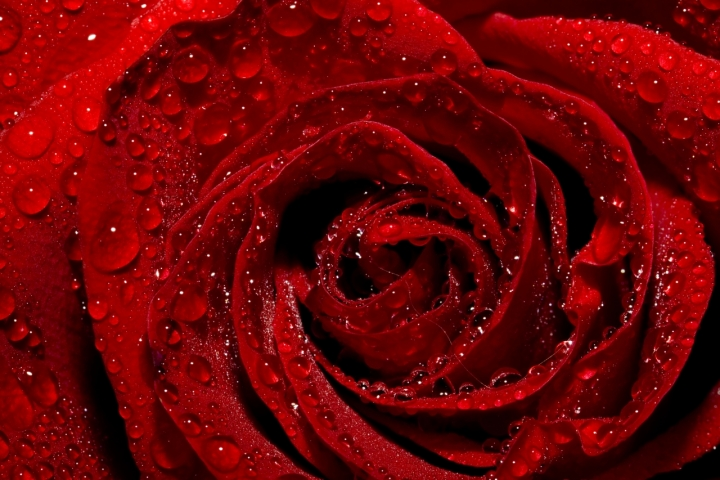 Red di fabio1962