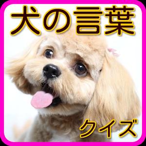 犬の言葉Q 犬の気持ち 犬の育て方 犬のしつけ方 愛犬