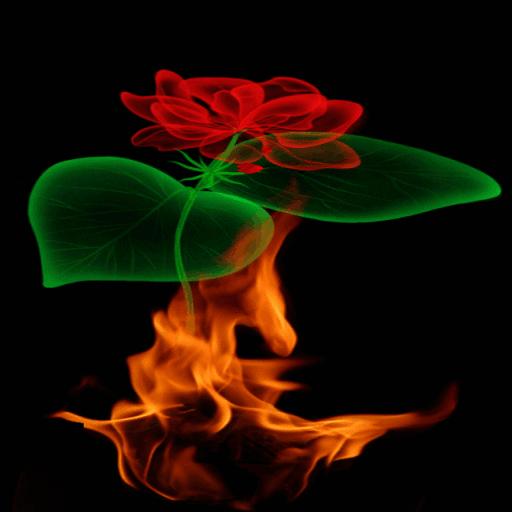 Fiery Rose Magic LWP