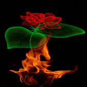 Fiery Rose Magic LWP