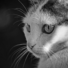 Ricki  by Todd Reynolds - Black & White Animals