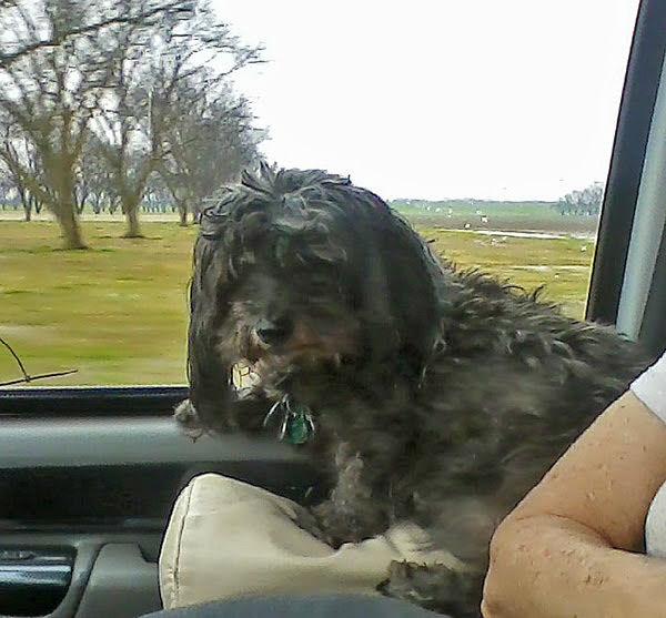 Skruffy's back in Arkansas