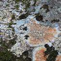 Orange boulder lichen