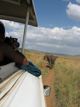 Photo: Following some elephants