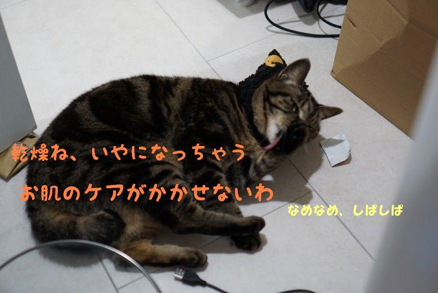 猫にアロマは命にかかわる?精油の危険性と猫に有害な成分について