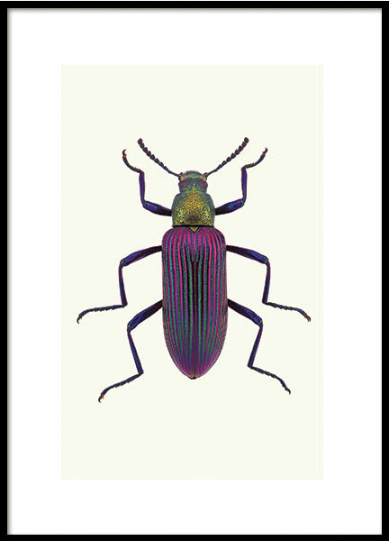 BEETLE, POSTER