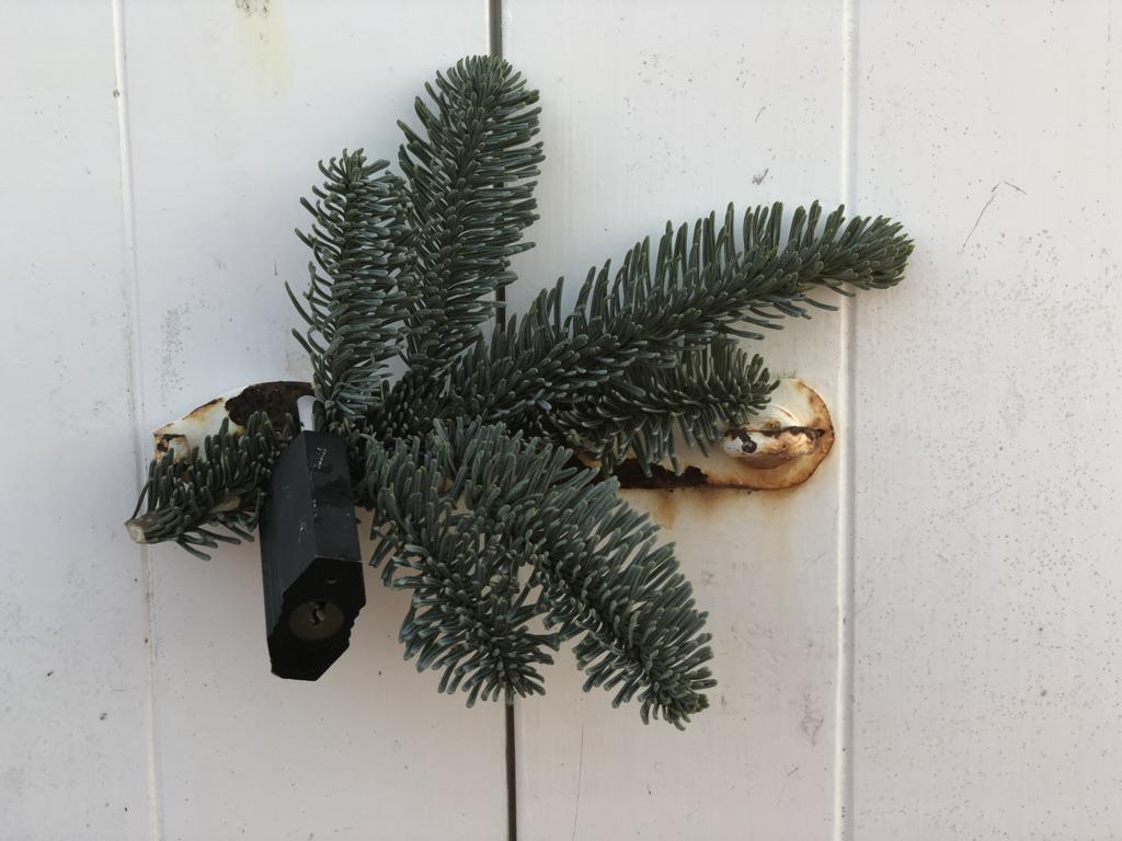 Et billede, der indeholder væg, plante, nåletræ  Automatisk genereret beskrivelse
